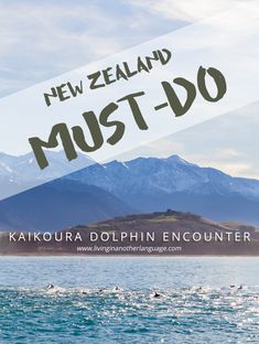 Swim with Dolphins in Kaikoura, New Zealand Visit New Zealand, New Zealand Travel, Vacation Destinations, Vacation Spots, Vacations, Dolphin Encounters, Countries Of The World, Australia Travel, Oh The Places You'll Go