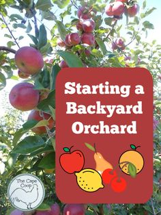 The best time for starting a backyard orchard is a couple years ago. But since we don't have time travel, let's say the best time to start is today! Fruit Trees, Fruit Bushes, Homestead Gardens, Bountiful Harvest, Tree Care, Edible Food, Plant Protein, Natural Garden, Grow Your Own Food