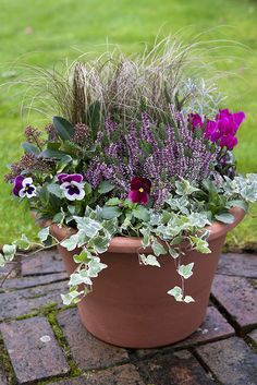 Cyclamen, heather and bulb pot display Terracotta pot filled with variegated Ivy, Skimmia, Pansy 'Raspberry Sunda', bronze ornamental sedge grass and Cyclamen hederifolium. Winter Planter, Fall Planters, Garden Planters, Autumn Planter Ideas, Balcony Garden, Autumn Garden Pots, Winter Garden, Autumn Flowers Garden, Planting Flowers