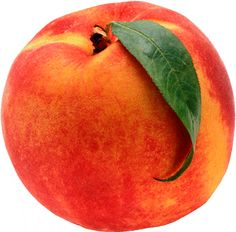 Six fresh cuttings of Elberta peach tree , inches long, Scion for grafting Healthy Fruits, Fruits And Vegetables, Healthy Foods, Healthy Desserts, Peach Cobbler Ingredients, Recipe Ingredients, How To Peel Peaches, Peach Party, Perfect Peach