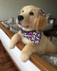 Make one special photo charms for your pets, 100% compatible with your Pandora bracelets.  Chloe ~ Golden Retriever Pup ~ Classic Look