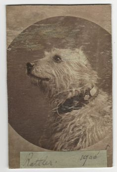 1900 ANTIQUE VICTORIAN CABINET PHOTO ~ RATTLER the TERRIER DOG ~ SOUTHPORT AREA