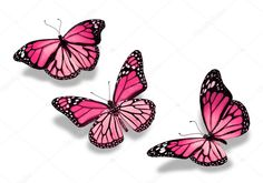 Three pink butterflies isolated on white background - Stock Photo Colorful Butterfly Drawing, Yellow Butterfly Tattoo, Monarch Butterfly Tattoo, Butterfly Tattoo On Shoulder, Butterfly Tattoos For Women, Butterfly Pictures, Butterfly Tattoo Designs, Butterfly Painting, Butterfly Wallpaper