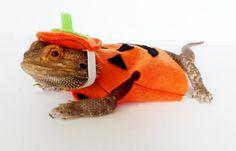 Bearded Dragon Clothing.. Jack-o-Lantern! By GetSTUFT on Etsy