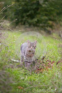 Cat in the bush #cat #foto #autumn #bush