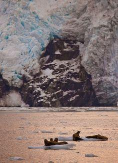Kenai Fjords National Park, Alaska; photo by .Gleb Tarassenko