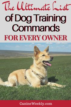 Training your dog is focused on building your relationship with your canine and implementing boundaries. Be firm yet consistent and you'll notice outstanding results in your dog training work. Positive Dog Training, Basic Dog Training, Training Your Puppy, Potty Training, Training Classes, Training Videos, Training Online, Training Schedule, Training Dogs