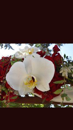 Arch Flowers, Plants, Plant, Planets
