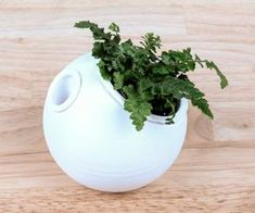 Picture of 3D Printed Self-Watering Planter