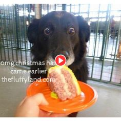 dog avoid eyes contact, trying not to get caught of staring dad's food Funny Dog Videos, Funny Dogs, Eyes, Food, Essen, Meals, Cat Eyes, Yemek, Eten