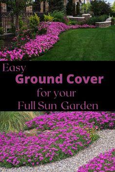 Flowering Ground Cover Perennials, Perennial Ground Cover, Full Sun Perennials, Flowers Perennials, Full Sun Landscaping, Southern Landscaping, Landscaping Plants, Front Yard Landscaping, Landscaping Ideas