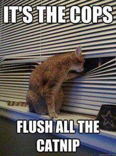 It's the cops, flush the catnip.