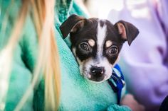One of the puppies that got adopted from the Puppy Bowl! Follow us to see more!
