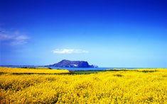 Spring on Jeju island 제주도 봄 #korea #jeju #nature