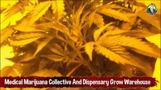 Medical Marijuana Collective and Dispensary Grow Warehouse 4 Plants in F...