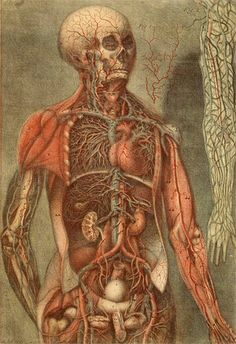 anatomical dissection of the body by jacques fabien gautier d'agoty
