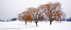 Rockway Golf course in winter Golf Courses, Trees, Wall Art, Winter, Places, Photography, Outdoor, Winter Time, Outdoors