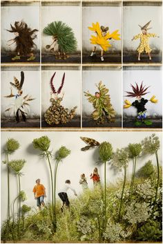 Natur-Bild-Collage