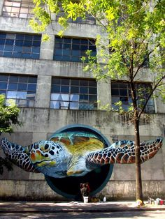 Turtle 3D street art❤️                                                                                                                                                                                 More