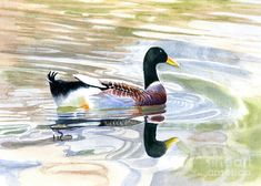 Colorful Duck Reflections Painting by Sharon Freeman