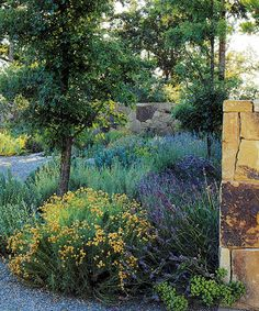 """""""Santolina 'Lemon Queen' provides a sunny splash of yellow in the arrival courtyard."""" Ron Lutsko Jr designed this all California native landscape for a couple of retired venture capitalists. """"napa au natural,"""" from the Met Home May 08 issue. Photographs by Marion Brenner, article by Janet Fletcher."""