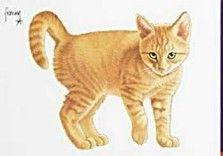 Postkaarten    Kleine Joris    Francien Westering, van    C8992    Katten (Rood), Postkaarten, Tekeningen, Dieren, Katten,