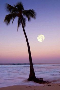 Periwinkle sky framing a palm tree at the ocean. Beautiful Moon, Beautiful World, Beautiful Places, Beautiful Pictures, Amazing Places, Tropical Paradise, Night Skies, Palm Trees, Mother Nature