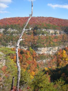 Cloudland Canyon, North-West Georgia. The 6-mile rim trail is so beautiful, especially in fall.