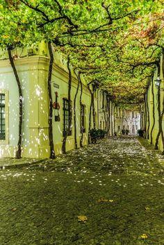 Seville, Spain Source by Beautiful Streets, Beautiful Places, Places To Travel, Places To See, Outdoor Walkway, Patio, Secret Places, Belle Photo, Landscape Design