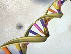 MIT chemical engineers discover, for the first time, how to control knots that form in DNA molecules. The findings could help researchers develop ways to untie DNA knots, which would help improve the accuracy of some genome sequencing technologies. Human Embryo, Human Dna, Human Genome, Human Body, Dna Molecule, Gene Therapy, Science News, Medical Science, Life Science