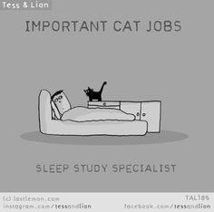 Cat Jobs | Last Lemon