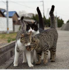 We 3 kitties