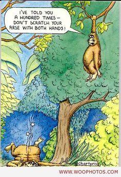 awesome Funny monkeys