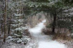 Hike of the Week: A Winter Wonderland in Maine: Gardenista