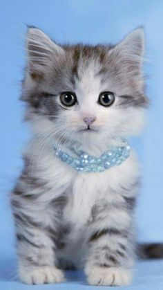 Cute Baby Cats, Cute Cats And Kittens, Cute Baby Animals, Kittens Cutest, Pretty Cats, Beautiful Cats, Animals Beautiful, Tiny Cats, Kittens And Puppies