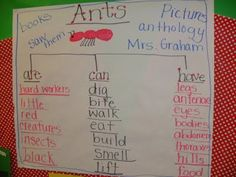 ants @Bethany Shoda Shoda Shoda....if u scroll down here's a teacher blog with activities etc she did with her students!