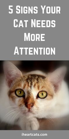 Signs Your Cat Needs More Attention Is your cat showing any of these signs?Is your cat showing any of these signs? Cat Care Tips, Pet Care, Pet Tips, Cute Kittens, Cats And Kittens, Cats Bus, Cat Info, Cat Hacks, Kitten Care