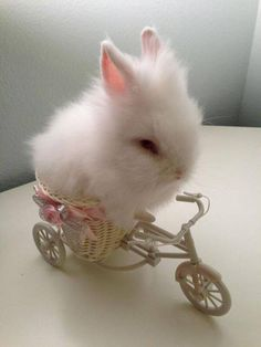 Little tiny bunny, bunny riding a bike, cute