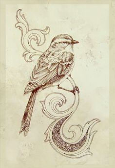 B&W canary. Beautiful pencil work. Great for center-piece of a playing card. -MV