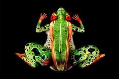 Body paint illusion: there are five people on this photo posing as a tropical frog
