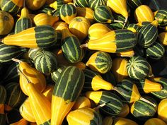 Green, yellow striped Pumpkins  Close up