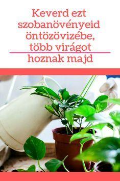 Pest Control, Organic Gardening, Fall Decor, Herbs, Plant, Autumn Decorations, Herb, Organic Farming, Bed Bugs Treatment
