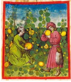 Tacuinum Sanitatis, ca. 1400 Melons