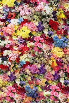 Carpet of Flowers colorful flowers pretty floral carpet mixture Flower Wall, My Flower, Flower Collage, Flower Bomb, Colorful Flowers, Beautiful Flowers, Fresh Flowers, Flower Power, Illustration