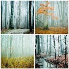Four 5x7  woodland tree Photographs  Fog series  by joystclaire, $43.00