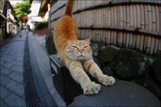 Фотоподборка. Милые кошечки и коты! (34)