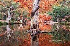 Image result for outback photos australia
