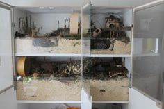 Hamster Habitat, Hamster Care, Baby Hamster, Hamster Stuff, Big Hamster Cages, Dog Enclosures, Mouse Cage, Gerbil, Small Farm