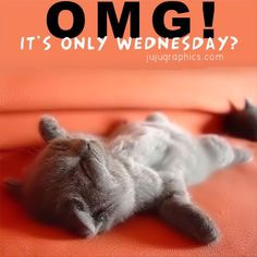 "Or is it...""It's Only Wednesday!""  Thank goodness there is more time to talk to more people about Rodan + Fields!  Ask me how... https://lskipper2.myrandf.com"