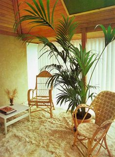 Success With Houseplants, 1979